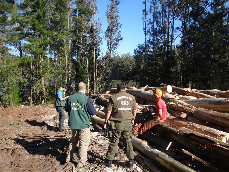 La comuna de Valparaíso lidera denuncias ciudadanas por presuntas talas ilegales de bosques en la región