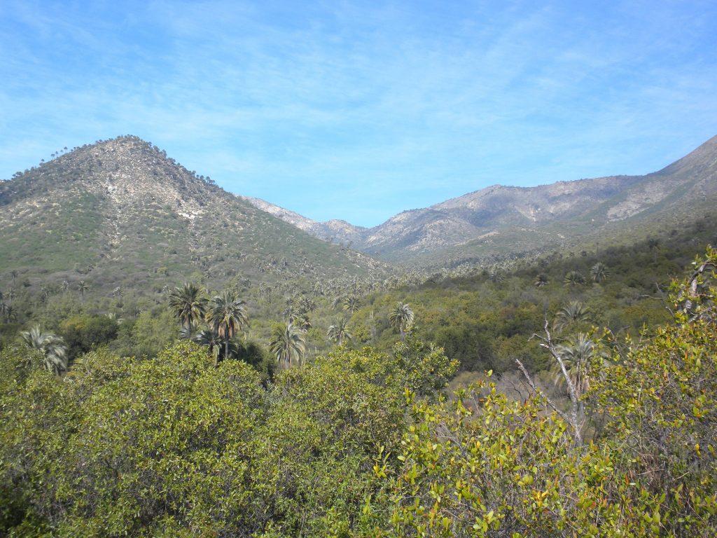 CONAF cerrará los tres sectores del Parque Nacional La Campana por sistema frontal