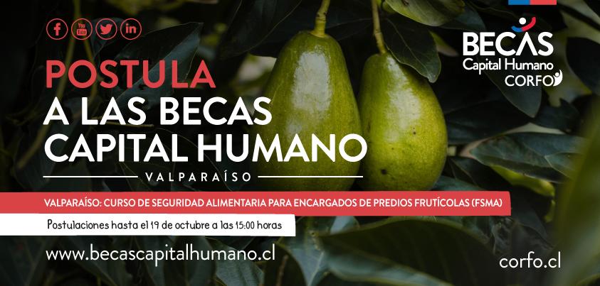 MargaMarga/Quillota: programa Becas Capital Humano de Corfo ofrece 80 cupos para curso sobre norma FSMA de Estados Unidos