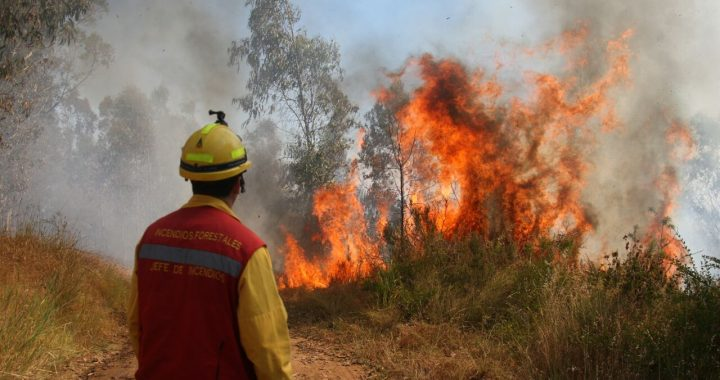 CONAF Valparaíso activa patrullajes para prevenir incendios forestales ante ola de calor
