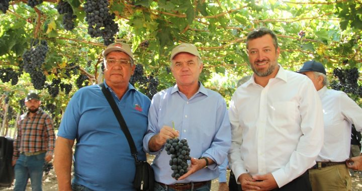 La mejora genética de la uva de mesa que conquista mercados internacionales