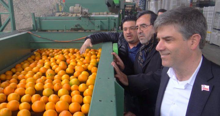 Desde packing de Quilpué envían fruta a todo el país