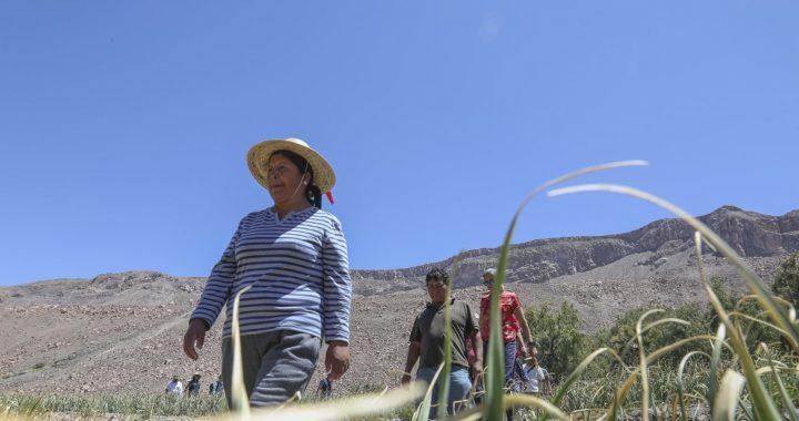 Indap presenta manual para prevenir COVID-19 en la pequeña agricultura del país